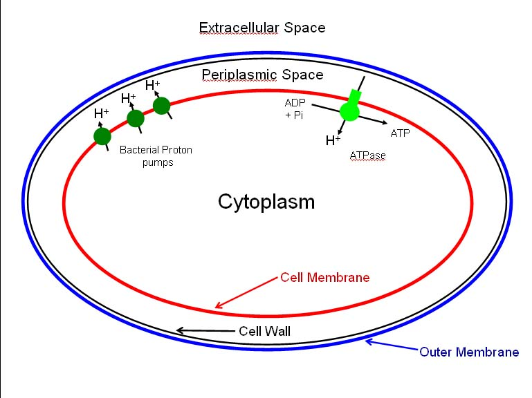 Re how do bacteria produce energy without a mitochondrion ccuart Choice Image
